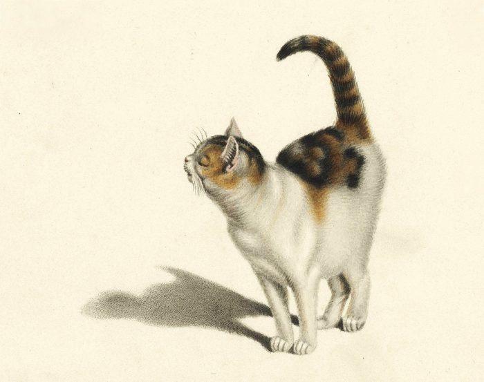 Photo of Gottfried Mind, el mejor dibujante de gatos de la historia