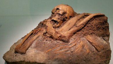 Photo of ¿Convivieron los neandertales con los homo sapiens?